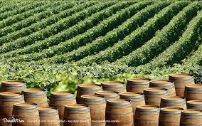 Wine Tour Lyon avec visite des caves chauffeur et guide